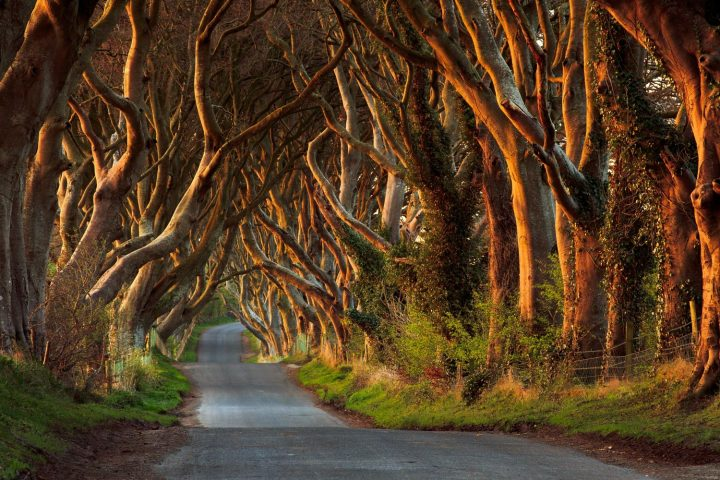 dark-hedges-2-copy