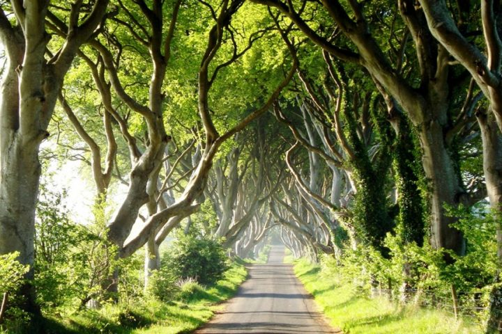 dark-hedges-3-copy