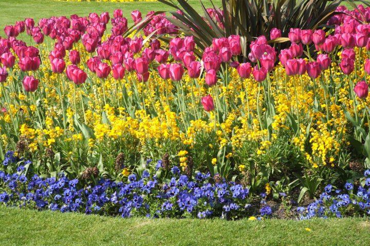 tulipan-1311218-1920x1440